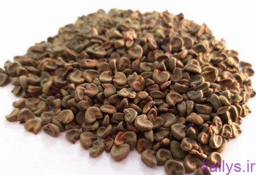 5dc1b6b574196  irnab ir نحوه کاشت چای ترش در گلدان