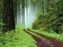 5e106c8413663  irnab ir انشا زیبا در مورد توصیف طبیعت
