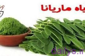 5e10b141170b3  irnab ir عوارض گیاه ماریانا چیست