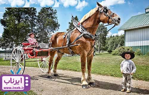 بزرگترین اسب جهان irnab.ir2  عکس رکورد گینس بزرگترین اسب دنیا