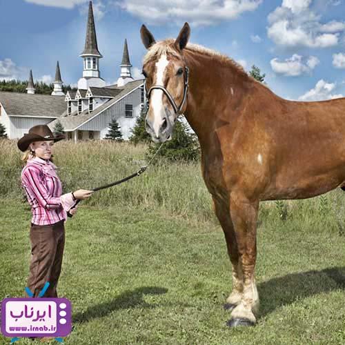 بزرگترین اسب جهان irnab.ir  عکس رکورد گینس بزرگترین اسب دنیا