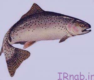 31 bisms.ir 2016 08 31 45 300x257 تعبیر خواب دیدن ماهی در رنگ های مختلف