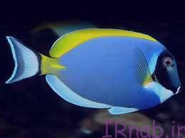 49 bisms.ir 2016 08 30 44 تعبیر خواب دیدن ماهی در رنگ های مختلف