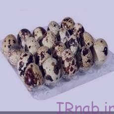 irnab.ir 72 تخم بلدرچین و خواصش را بدانید