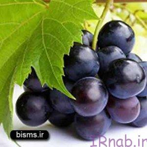 irnab.ir 82 300x300 خواص انگور سیاه در بارداری