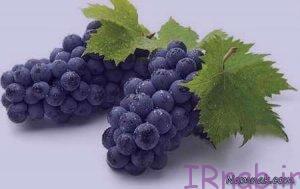 irnab.ir 83 300x189 خواص انگور سیاه در بارداری