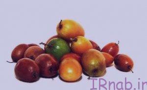 irnab.ir 9 300x183 خواص عناب چیست