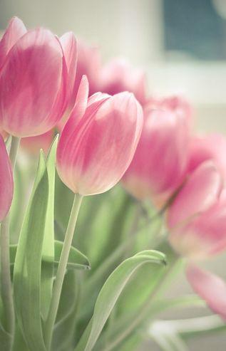 599838d2412dc عکس گل های عاشقانه جهان irnab ir گالری عکس 12 تا از زیباترین گل های عاشقانه جهان