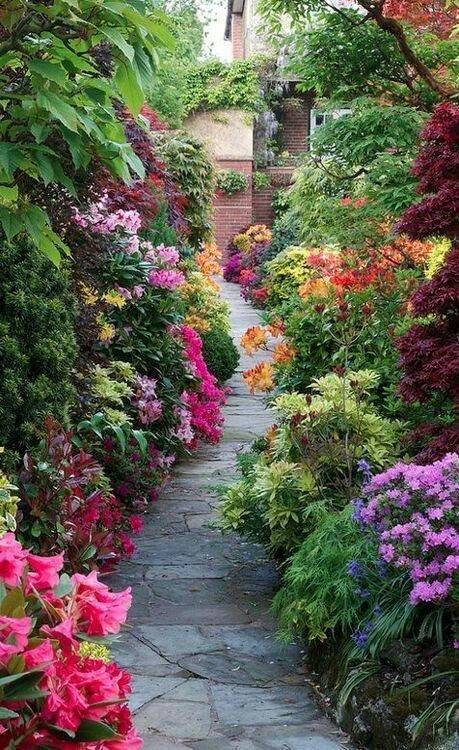 599838e1d5176 عکس گل های عاشقانه جهان irnab ir گالری عکس 12 تا از زیباترین گل های عاشقانه جهان