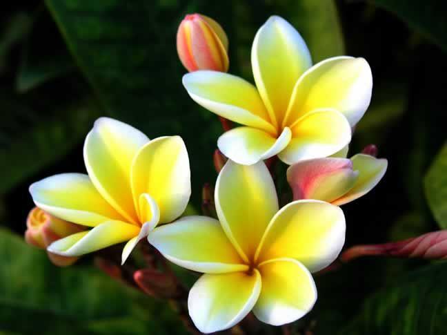 599838f1d0bd8 عکس گل های عاشقانه جهان irnab ir گالری عکس 12 تا از زیباترین گل های عاشقانه جهان