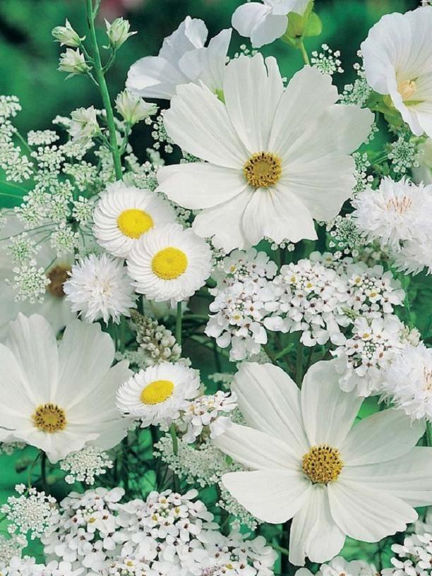 599838f798862 عکس گل های عاشقانه جهان irnab ir گالری عکس 12 تا از زیباترین گل های عاشقانه جهان