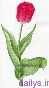 axhaeeaznaghashi ghollale irnab ir عکس هایی از نقاشی گل لاله