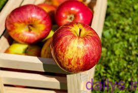 tarztahiye kompotsibkhaneghi irnab ir طرز تهیه کمپوت سیب خانگی
