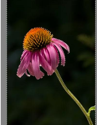 5b52cb8d852bb نحوه ی جدا بخشی عکس zoner photo studio x irnab ir نحوه ی جدا کردن بخشی از عکس در Zoner Photo Studio X