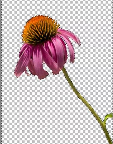 5b52cb9166142 نحوه ی جدا بخشی عکس zoner photo studio x irnab ir نحوه ی جدا کردن بخشی از عکس در Zoner Photo Studio X