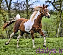 khavas shirasb irnab ir خواص شیر اسب