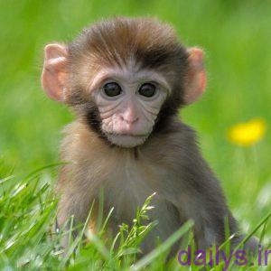 tabirkhab meymon irnab ir تعبیر خواب میمون