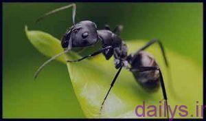 tabirkhab morche irnab ir تعبیرخواب مورچه