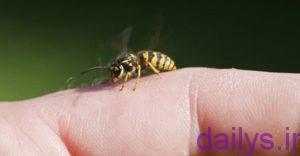 darman zanborzadeghi irnab ir درمان زنبورزدگی
