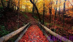 ensha darmoredpaeez irnab ir انشا در مورد پاییز