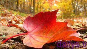 sherdarmored paeiz irnab ir شعر در مورد پاییز