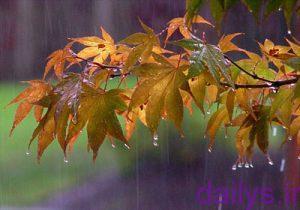 favayed baran irnab ir فواید باران