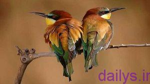 tabirkhab parandeziba irnab ir تعبیر خواب پرنده زیبا