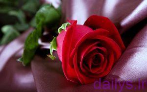 5c652e5011644 azgholroz ghermez irnab ir عکس گل رز قرمز