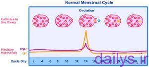 andazefolikolmonaseb barayebardari irnab ir اندازه فولیکول مناسب برای بارداری