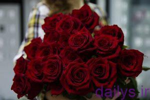 azgholroz ghermez irnab ir عکس گل رز قرمز