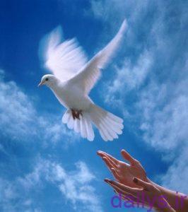 hadisdarmored ekhtiyarvaazadi irnab ir حدیث در مورد اختیار و آزادی