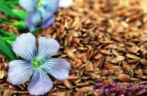 amozeshkasht ghiyahkatan irnab ir آموزش کاشت گیاه کتان