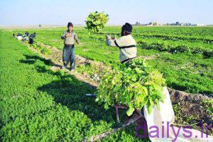 tabirkhab zaminkeshavarzi irnab ir تعبیر خواب زمین کشاورزی