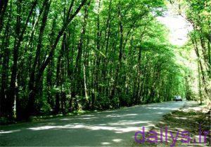 معرفی جنگل گیسوم در تالش
