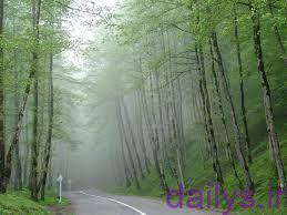 moarefy janghaldalkhani irnab ir معرفی جنگل دالخانی