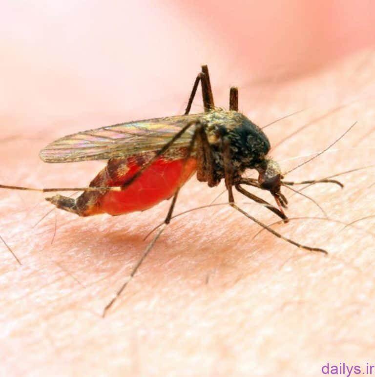 amel bimari malaria irnab ir عامل بیماری مالاریا