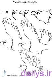 آموزش نقاشی عقاب irnab ir آموزش نقاشی عقاب